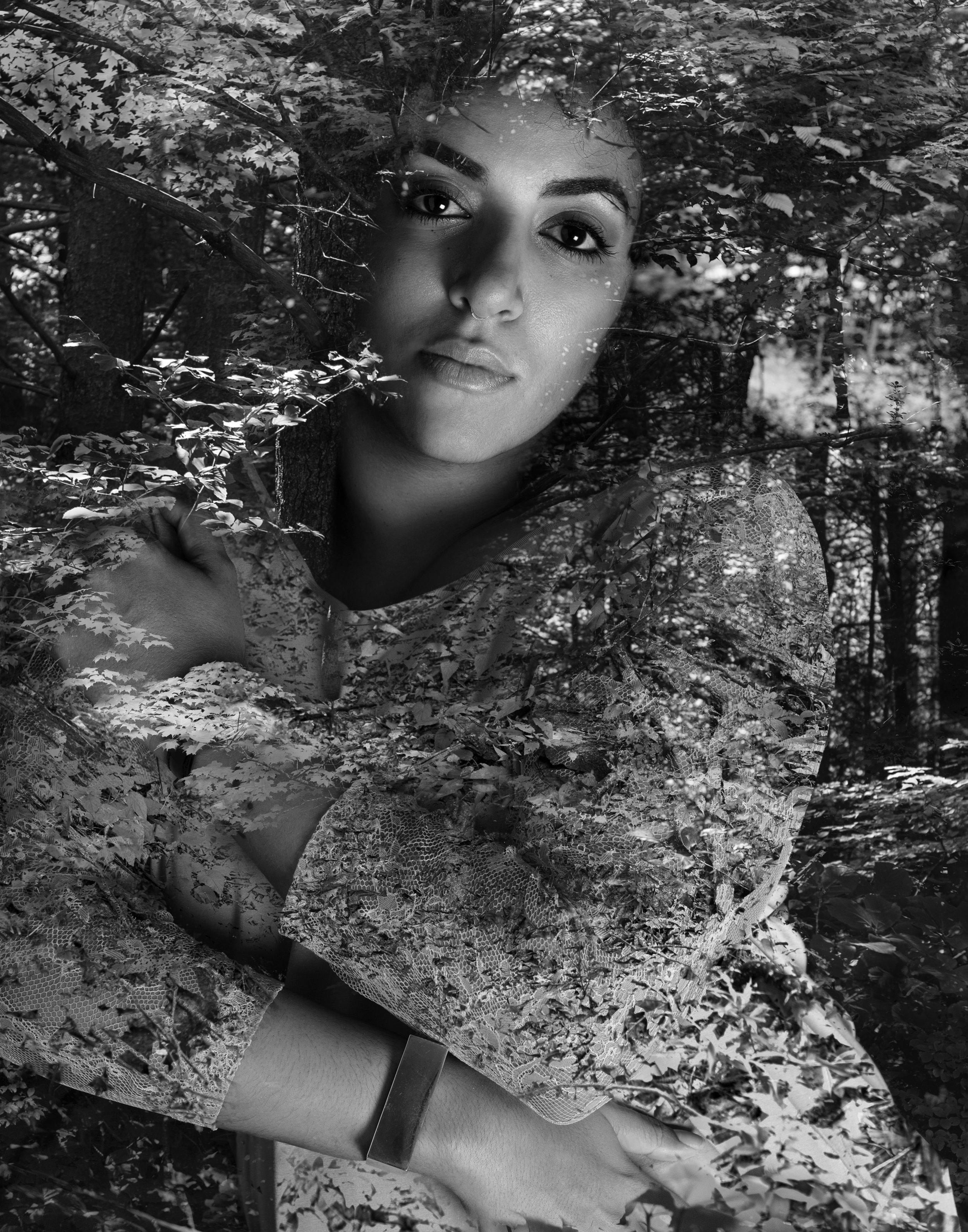 nora-6173_trees_ncphoto.jpg