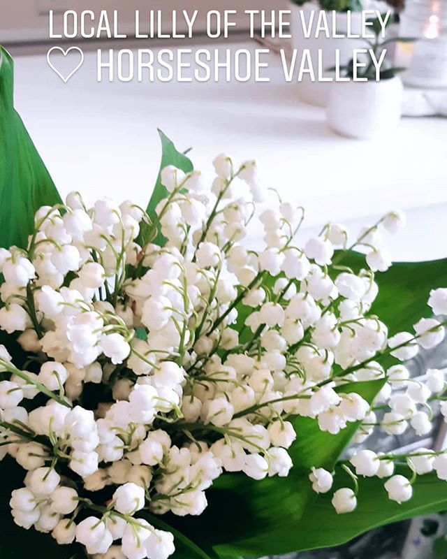 Be sure to visit Astilbe for locally grown blooms in the heart of horseshoe valley! Available weekly focusing on custom bespoke design & Marketplace bouquets  #shoplocal #astilbemarketplace #artisans #florals #farmers #barrieflorist #torontoflorist #muskokaflorist #horseshoevalley