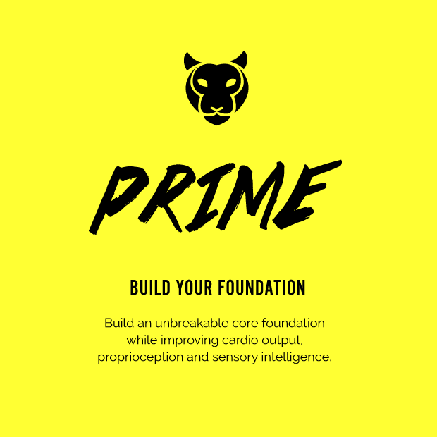 prime_slide1.png