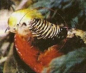 Afgebleekte oranje kraag