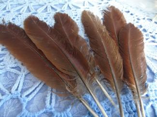 Vleugel hen