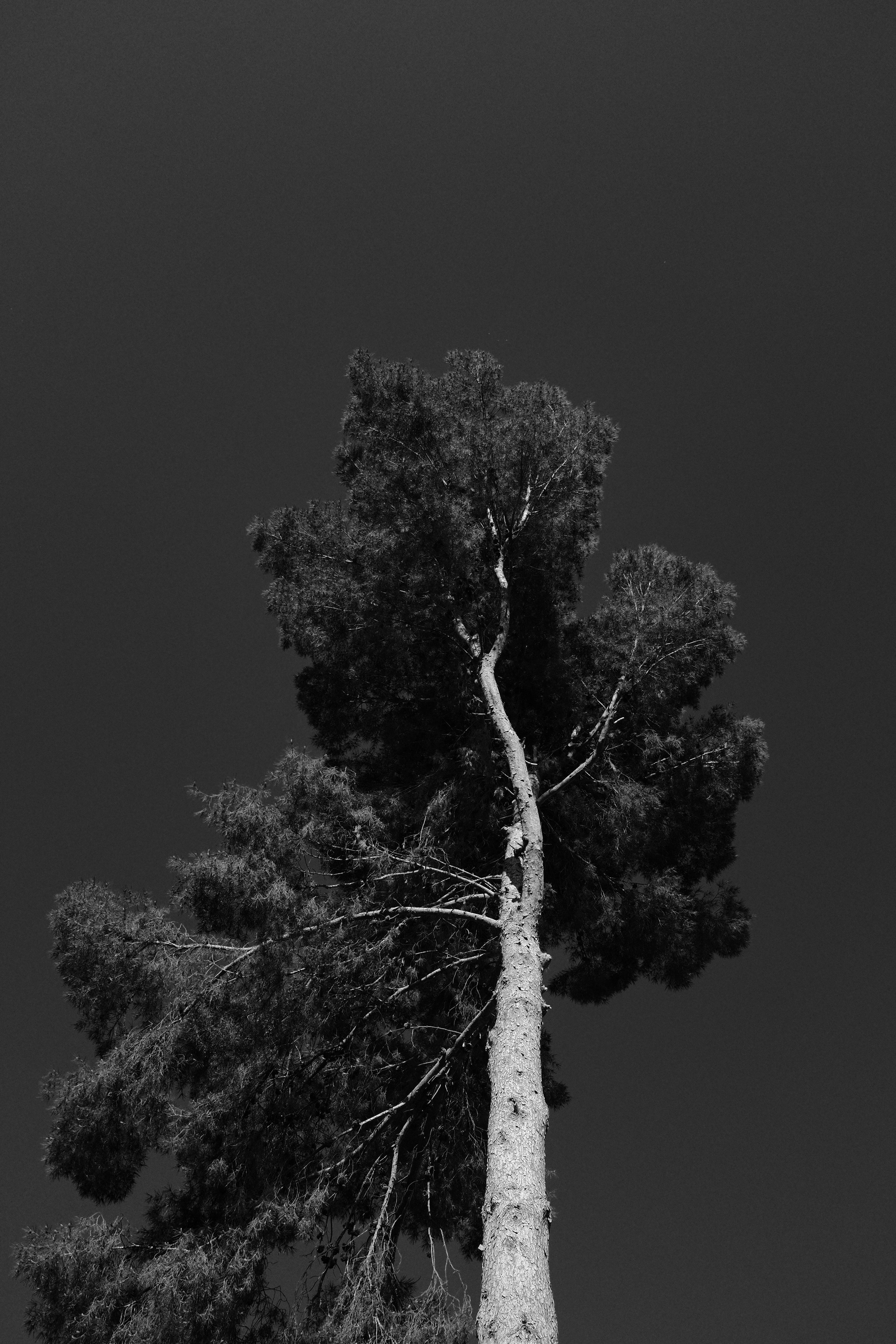 One of the few trees still standing in the same place where me and my brothers grew up - Fujifilm X100F Acros Film Simulation