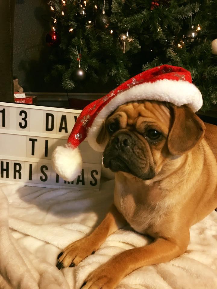 Christmas pub pug