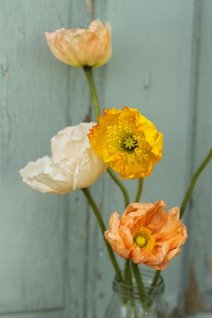 Poppies Icelandic, white, peach, coral, pink, yellow