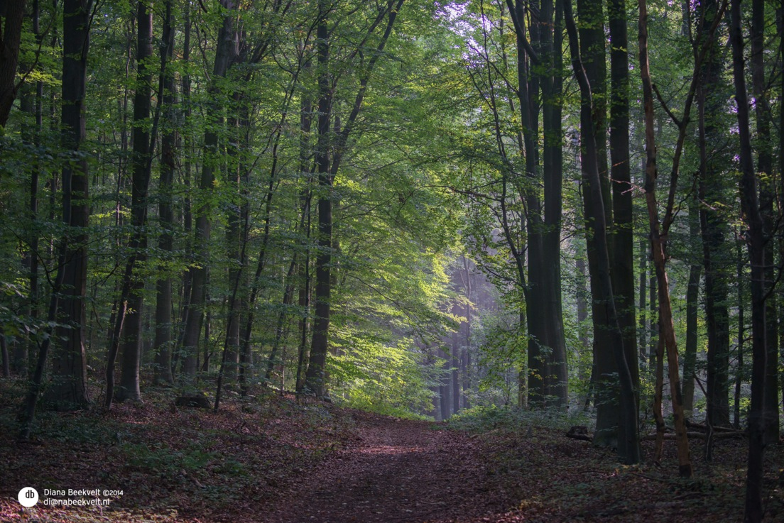De bossen lagen er prachtig bij....