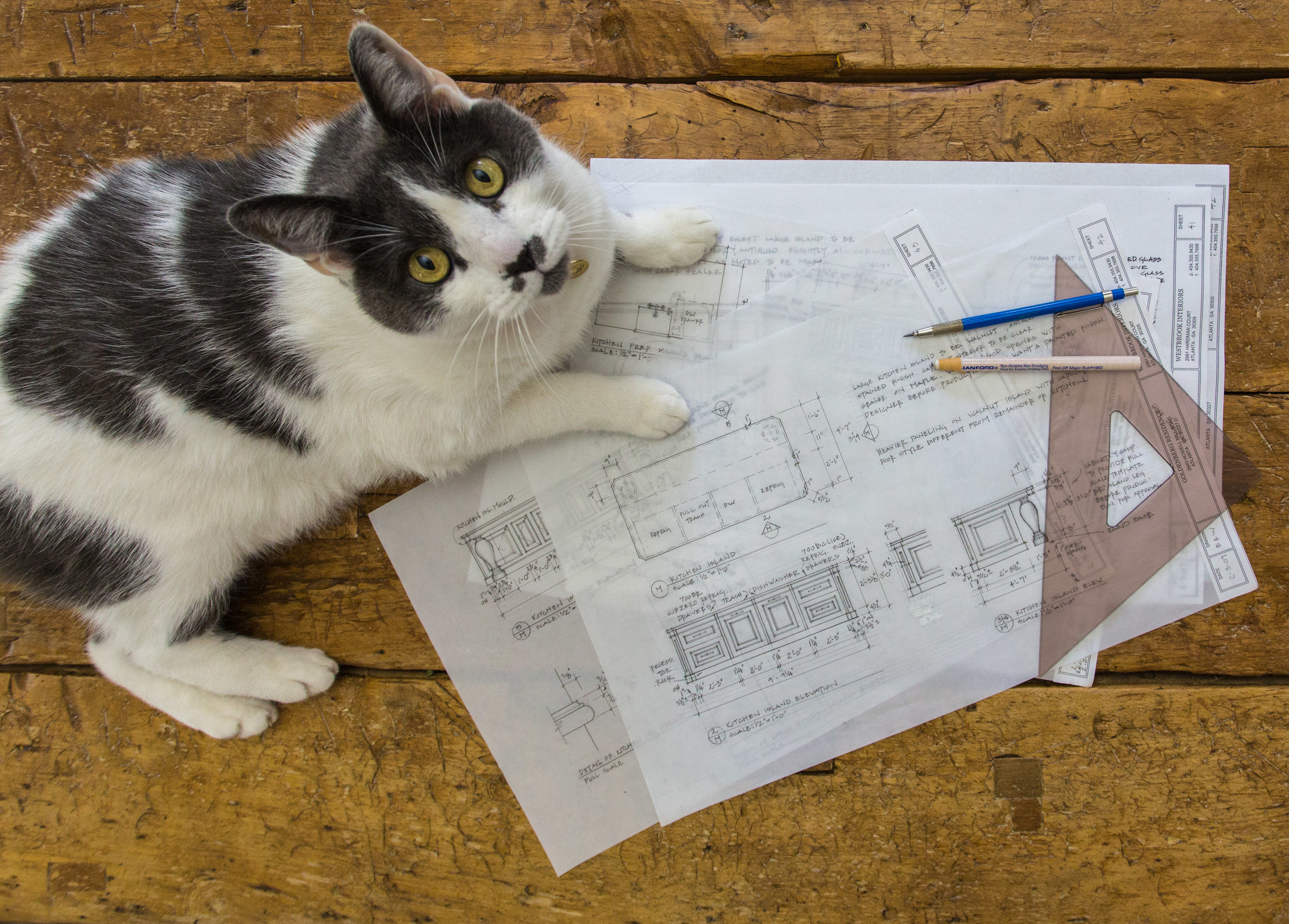 Cat with a Plan - Workbook