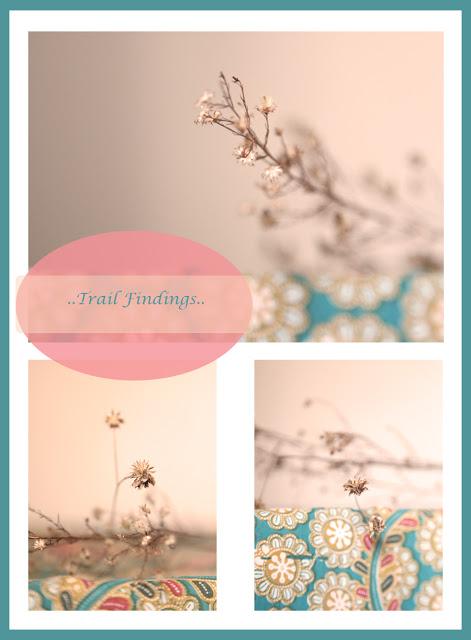 trailfindings_flat.jpg