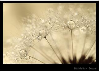 Screen+shot+2012-04-10+at+2.01.16+PM.png