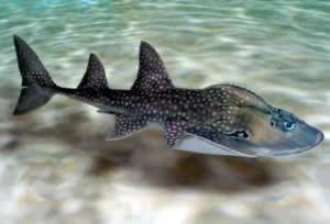 shark_ray_aquarium.jpg