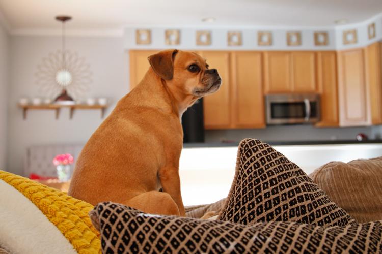 livingroomblog_10.jpg