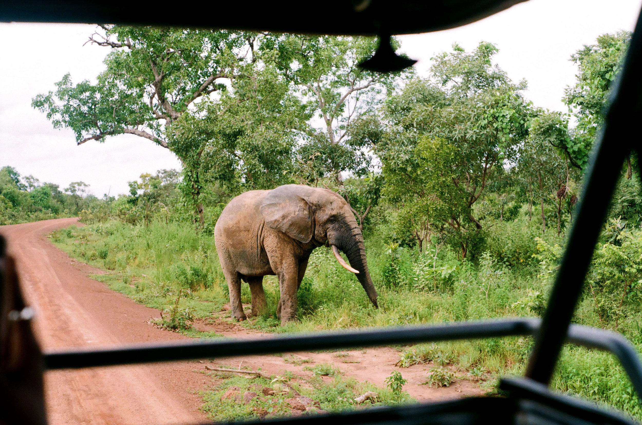 On our way back to Zaina Lodge we came across this beautiful elephant, what a way to end the day.