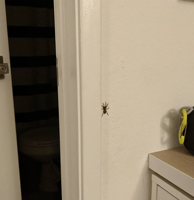 Here is a spider in my room, and a zoomed full scale version so that you all understand why I burned down my apartment last night