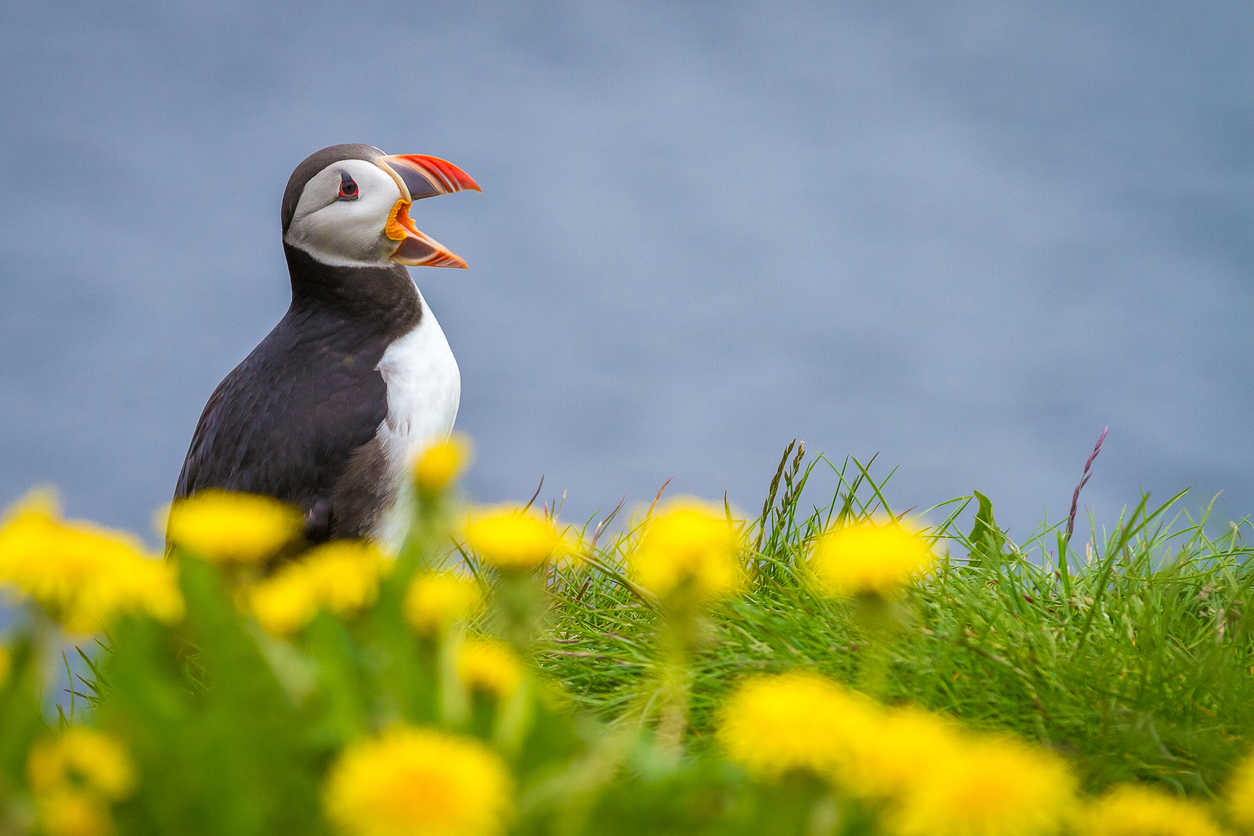 Iceland_20140606-10_South to Puffins-119.jpg