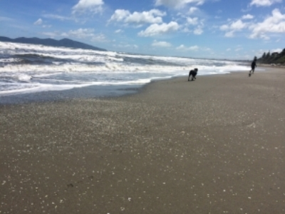 New Zealand beaches with dogs