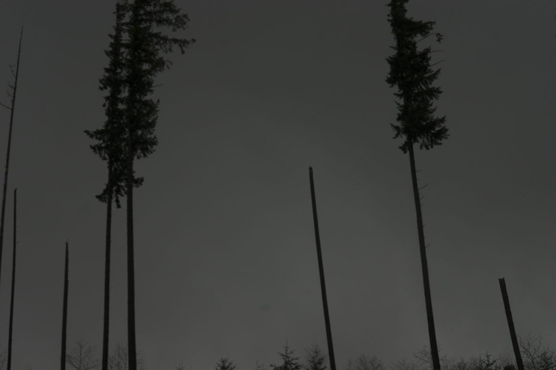 DSC02003x.jpg