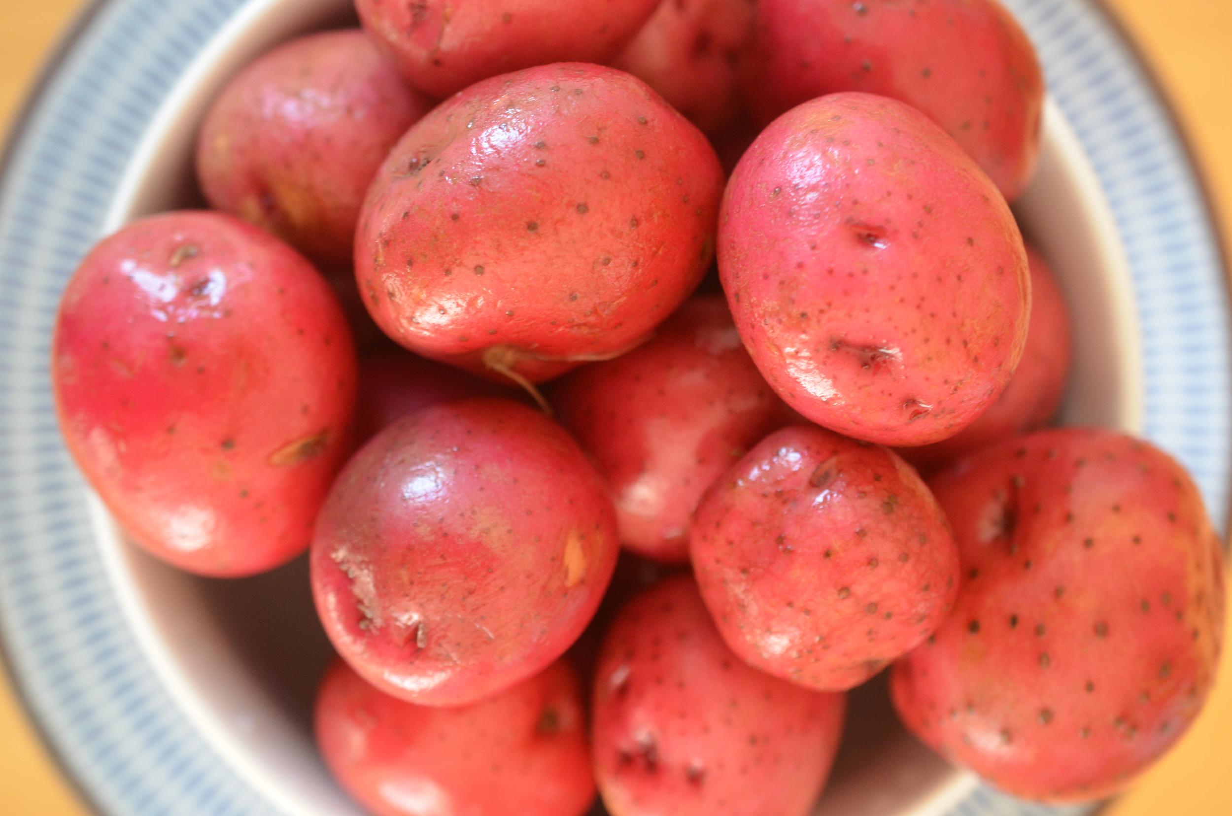 Red potatoes for simple 4th of July recipe side dish potato salad with shallot oil and amber vinegar