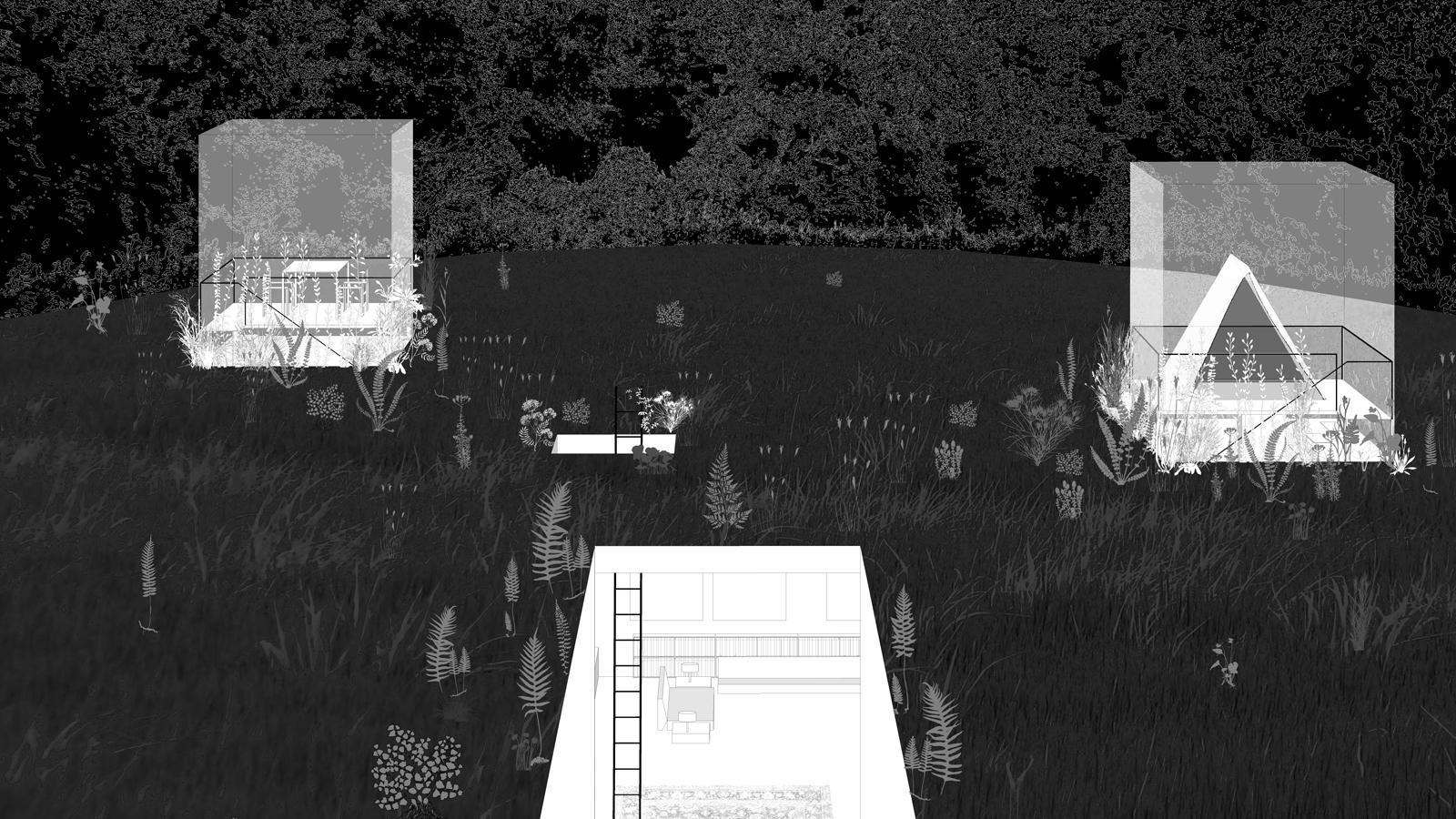 Forest-closeup-final.jpg