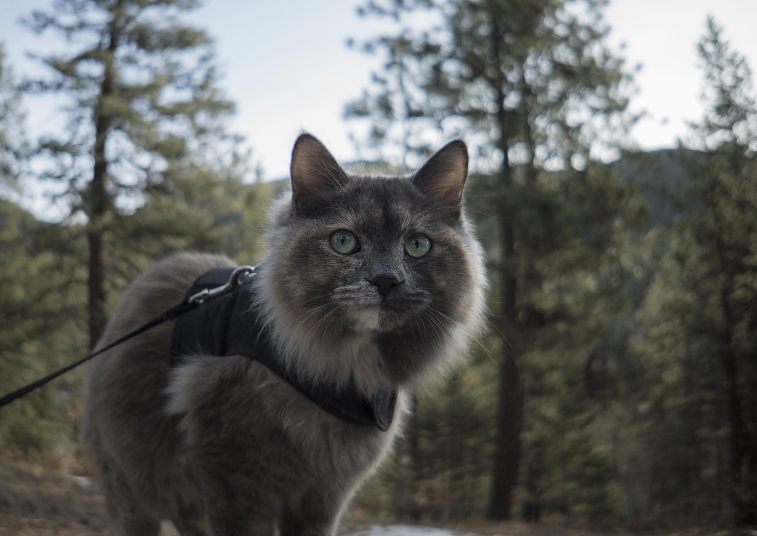 Camping Kitty.jpg