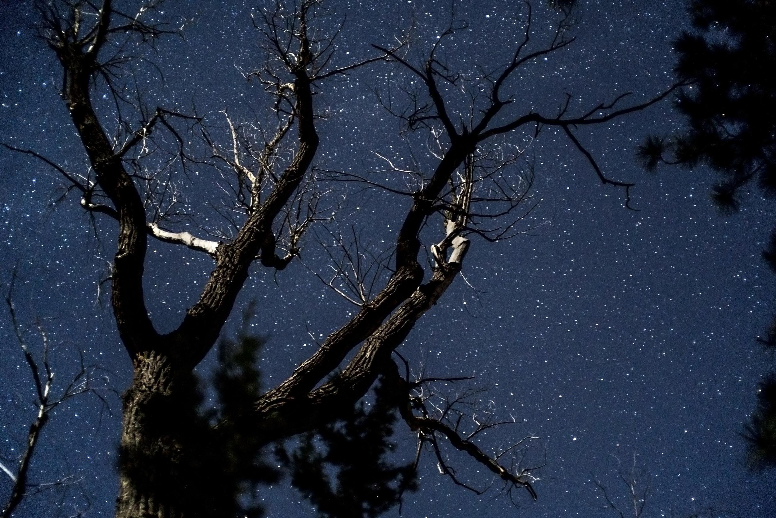 Starry Tree.jpg