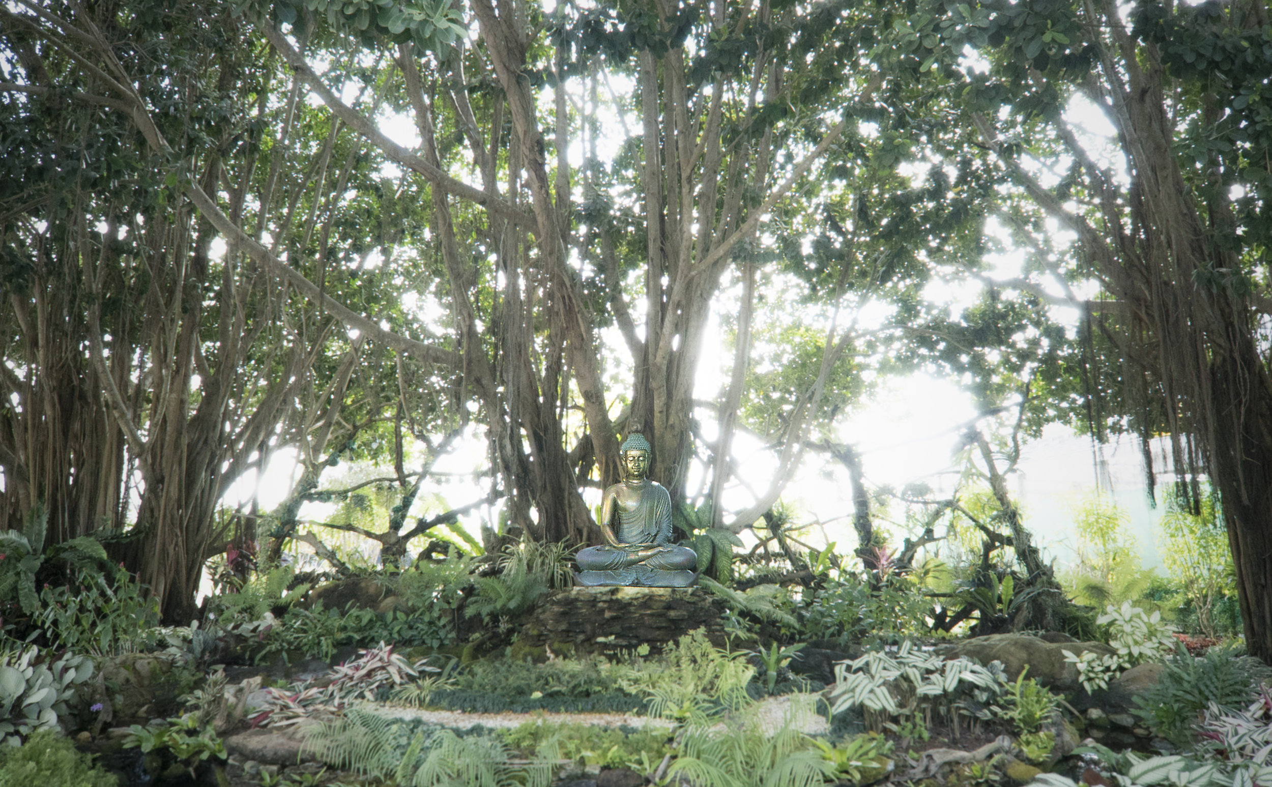 Boddhi Tree.jpg