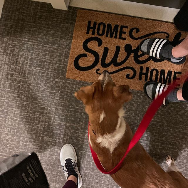 Welcome home buddy 💕 . . . #newroomate #cutestroomie