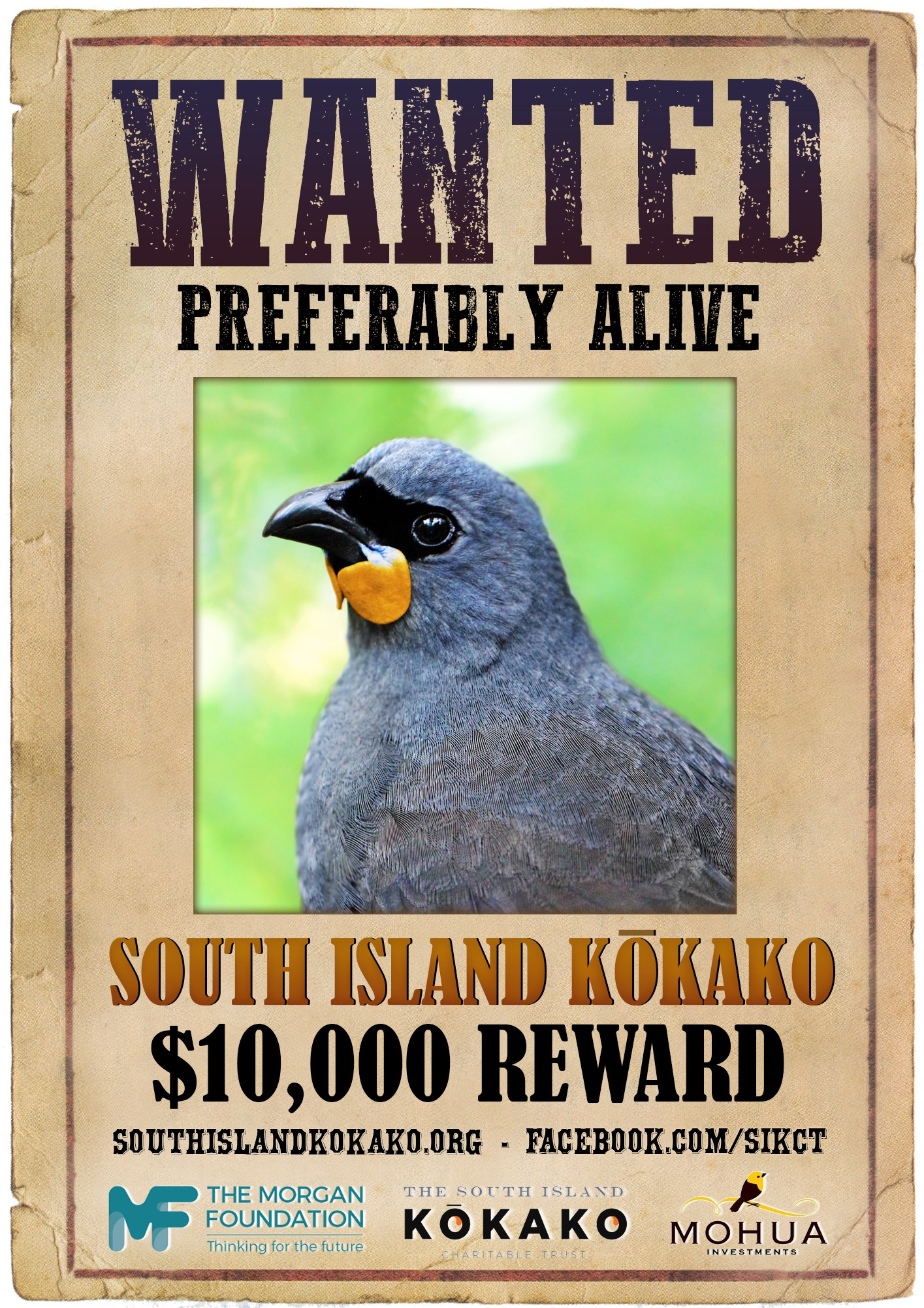 SI kokako wanted poster. Original image of NI kokako by Tara Swan, creative touches by Oscar Thomas and Geoff Reid