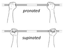 pronated and supinated hand position at klub athletik beaconsfield west island gym