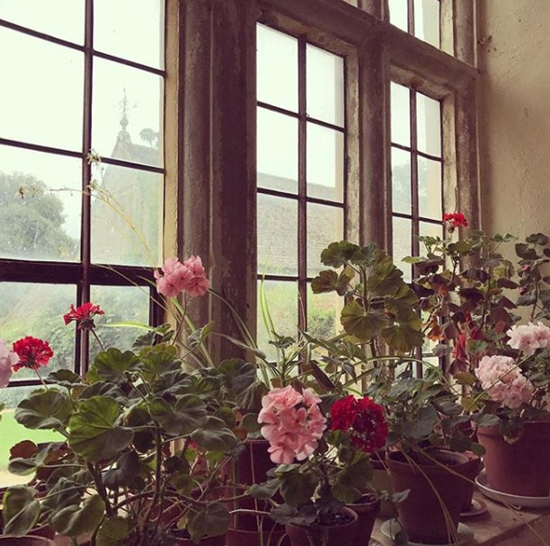 Hothouse Flowers.⠀⠀⠀⠀⠀⠀⠀⠀⠀ ⠀⠀⠀⠀⠀⠀⠀⠀⠀ #winterflorals #greenhouse #floralprint #binnywear⠀⠀⠀⠀⠀⠀⠀⠀⠀ ⠀⠀⠀⠀⠀⠀⠀⠀⠀ image via @miranda.brooks.gardens