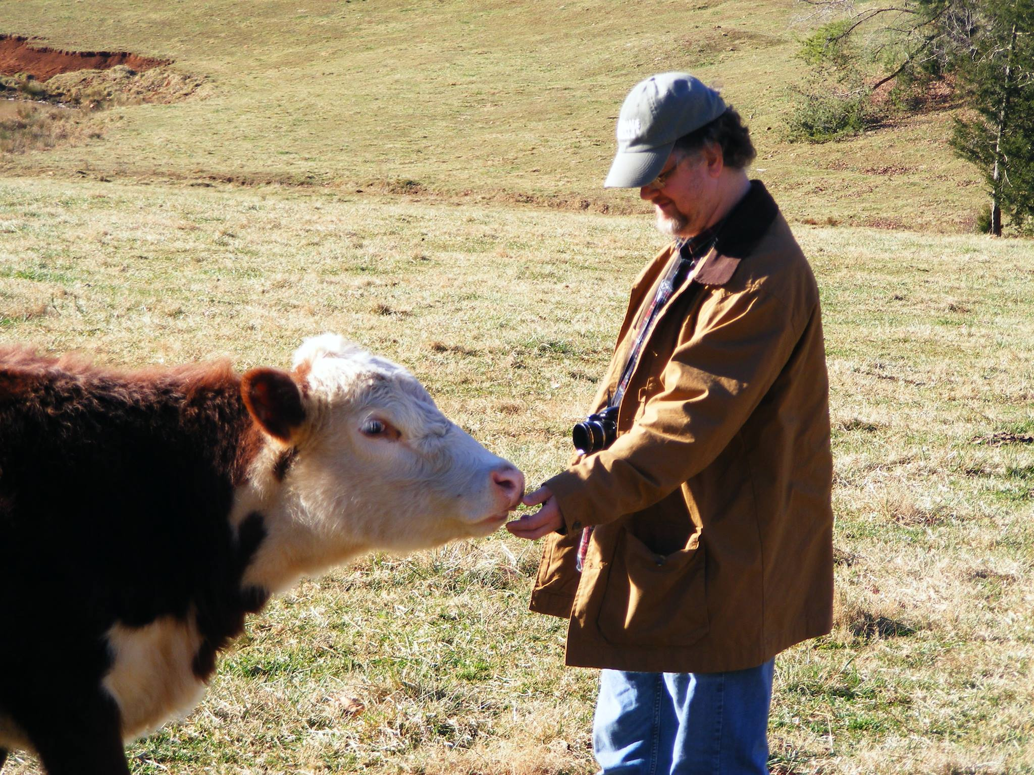 Greg Osterhause and cow bio pic