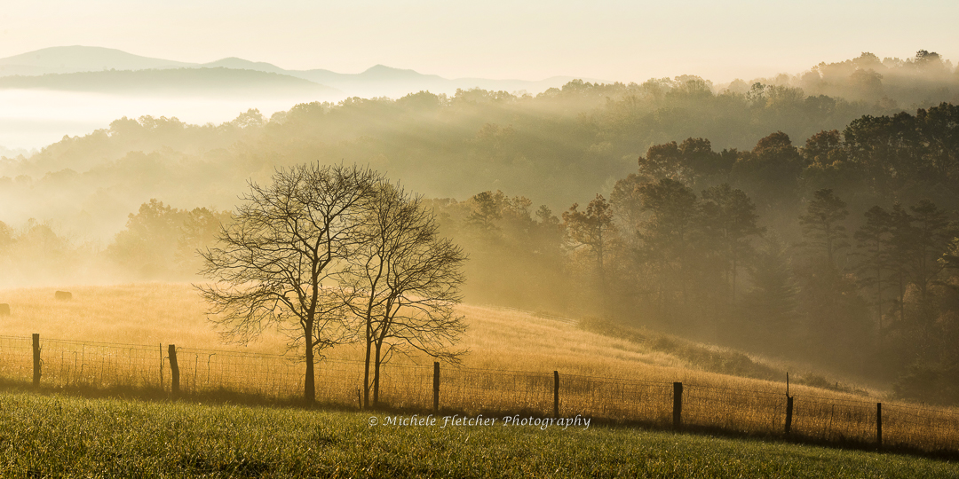 Autumn Morning - Michele Fletcher