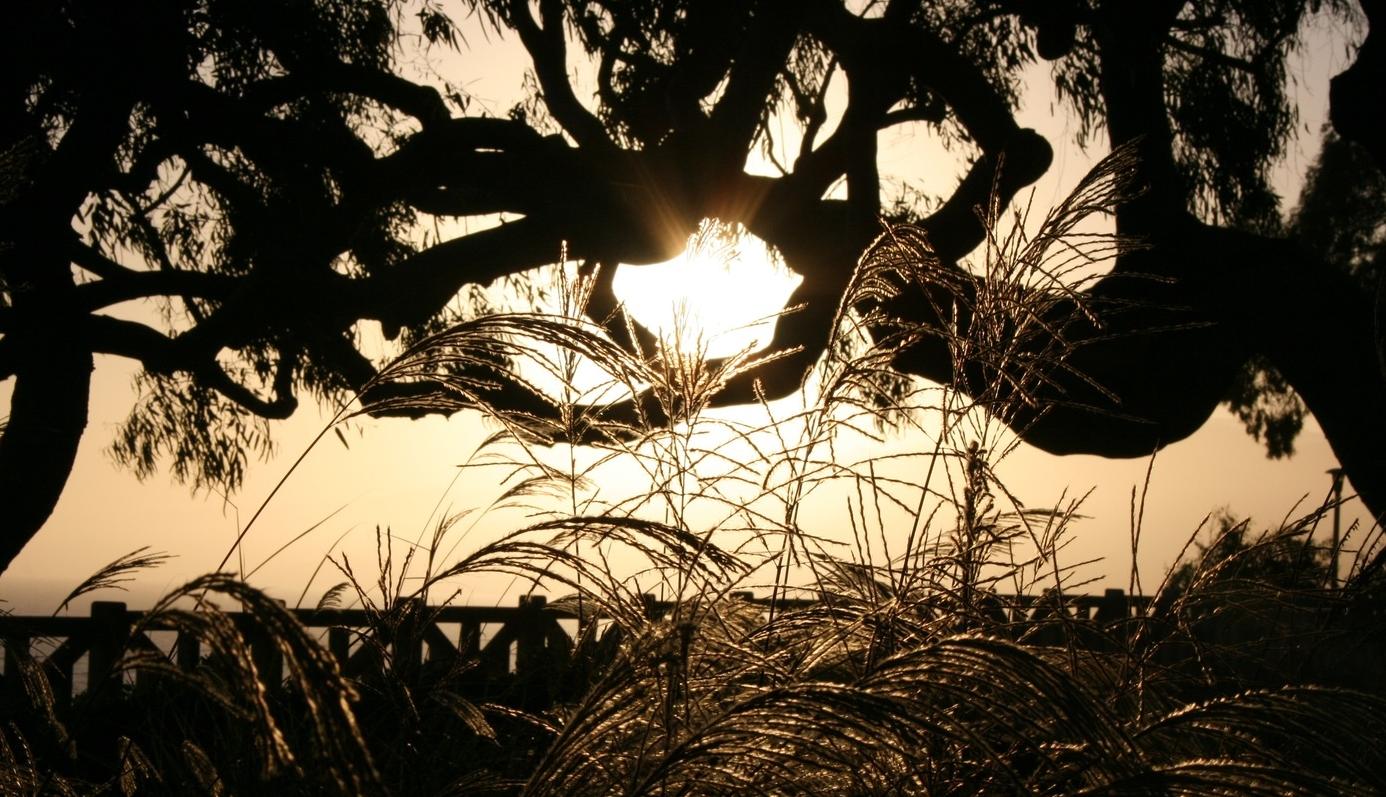 Photograph by Robyn Jensen, 2012
