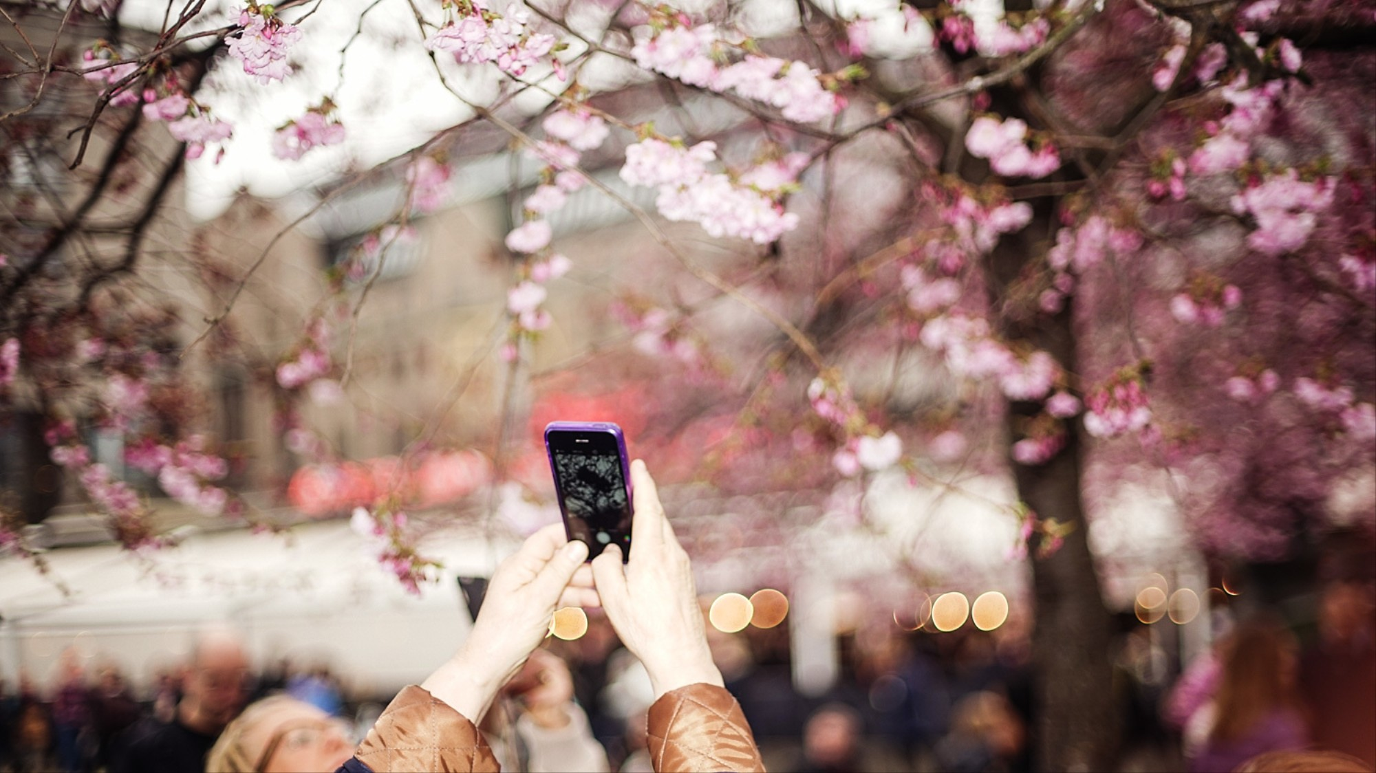Photos of People Taking Photos of Cherry Blossom, VICE Magazine