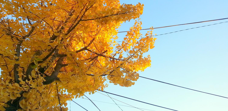 Korea-Autumn-Leaves