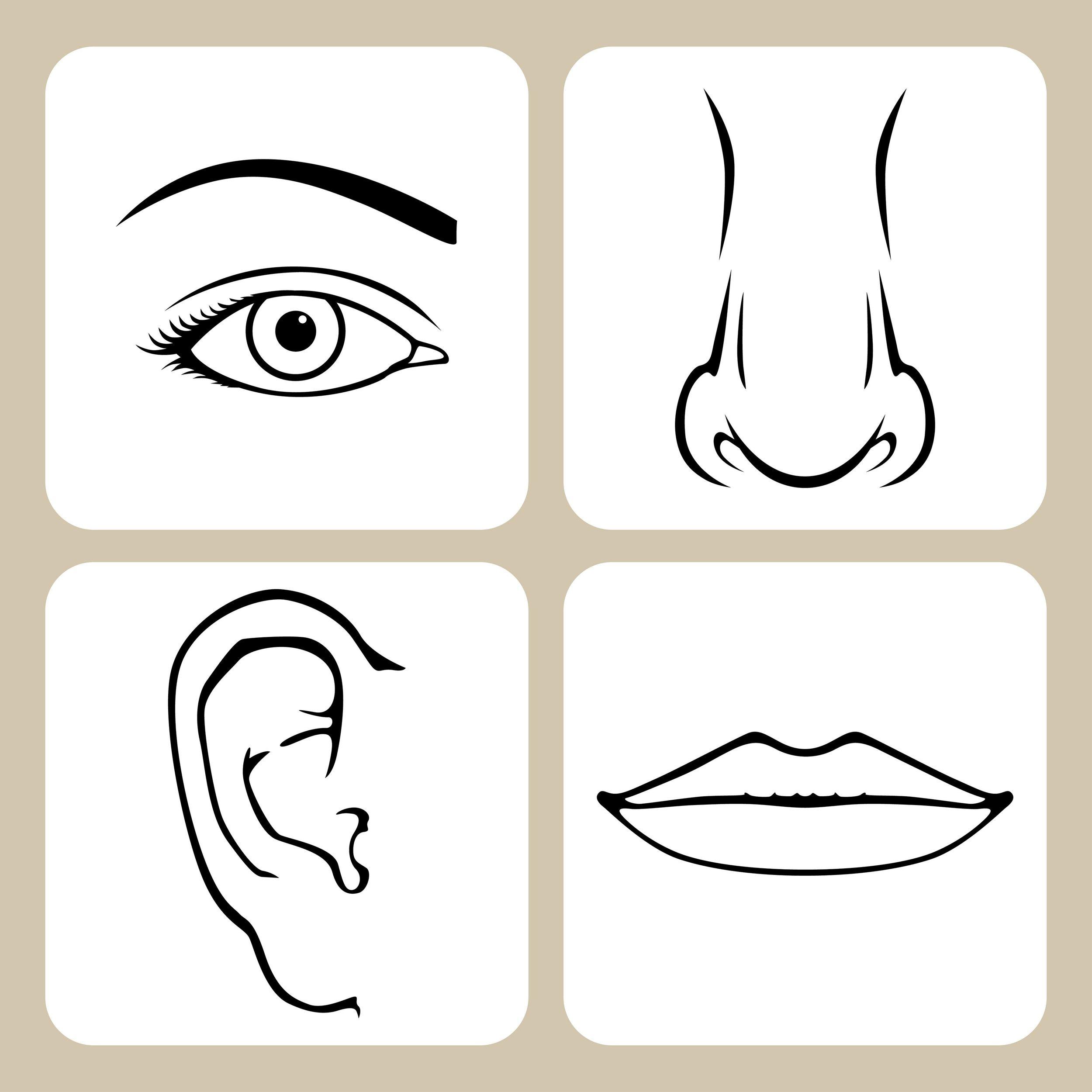 yogarei-face-organs