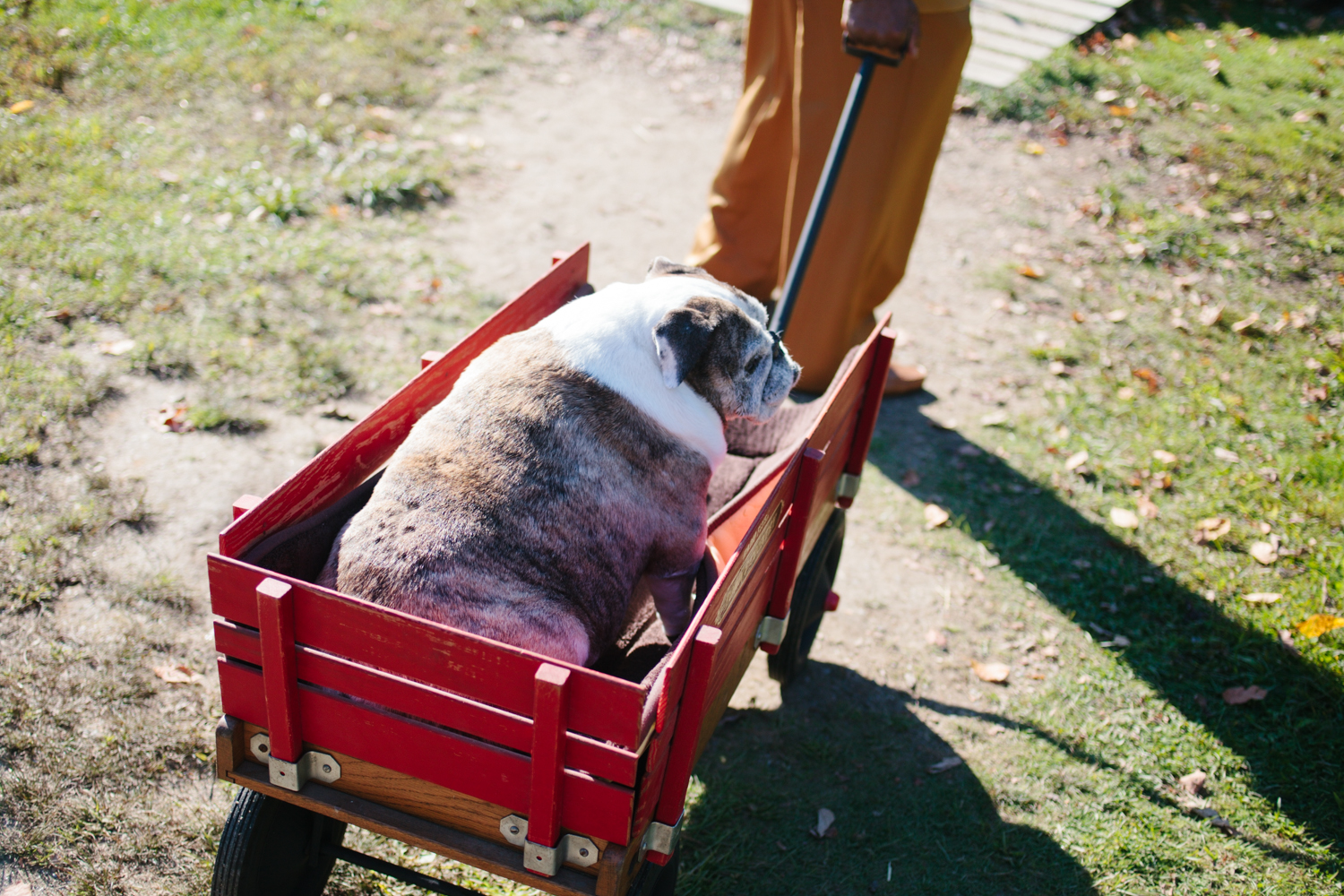 Apparently no wedding is complete without a cute dog in a wagon!