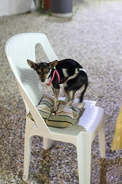 Dog-on-Chair.jpg