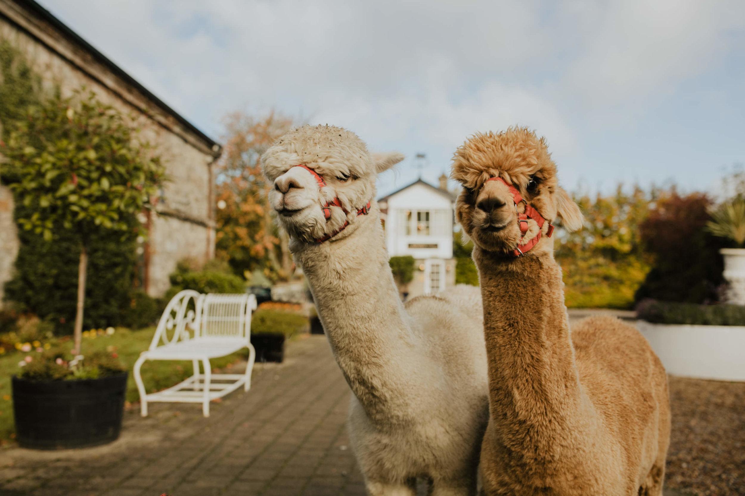 boho_wedding_alpaca_xpose_station_house_livia_figueiredo_photography_01.jpg