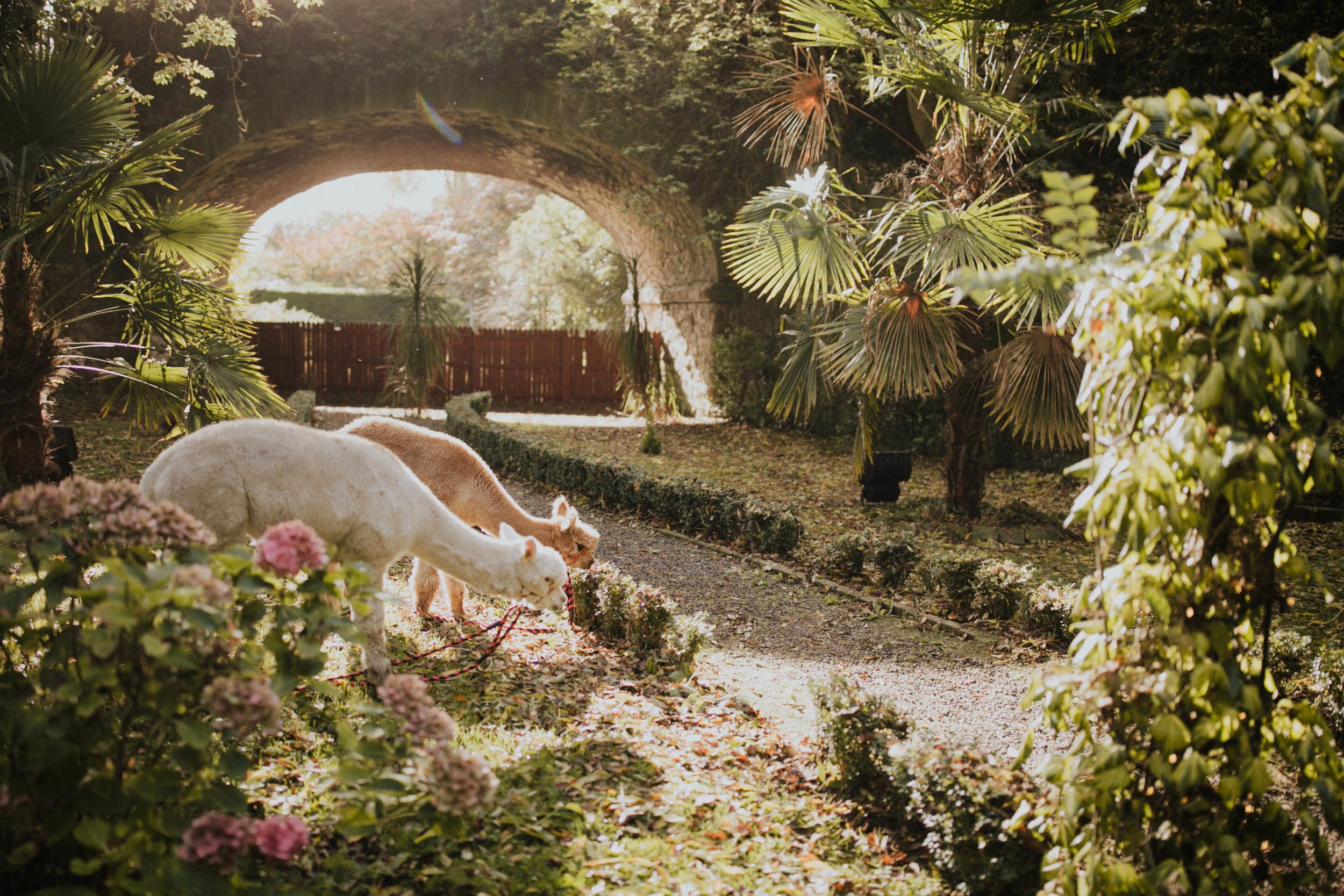 boho_wedding_alpaca_xpose_station_house_livia_figueiredo_photography_07.jpg