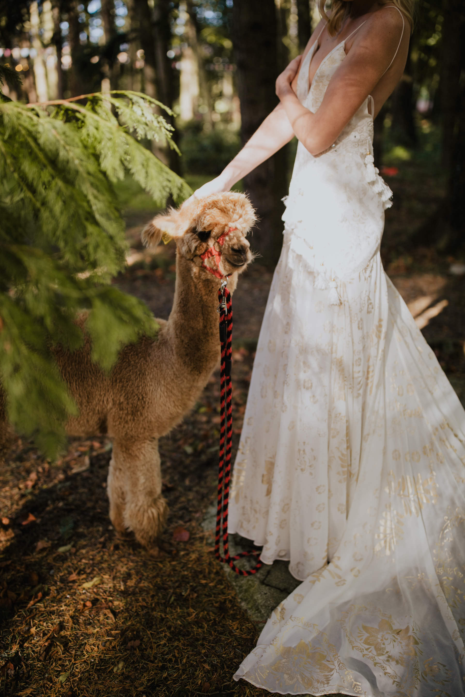 boho_wedding_alpaca_xpose_station_house_livia_figueiredo_photography_26.jpg