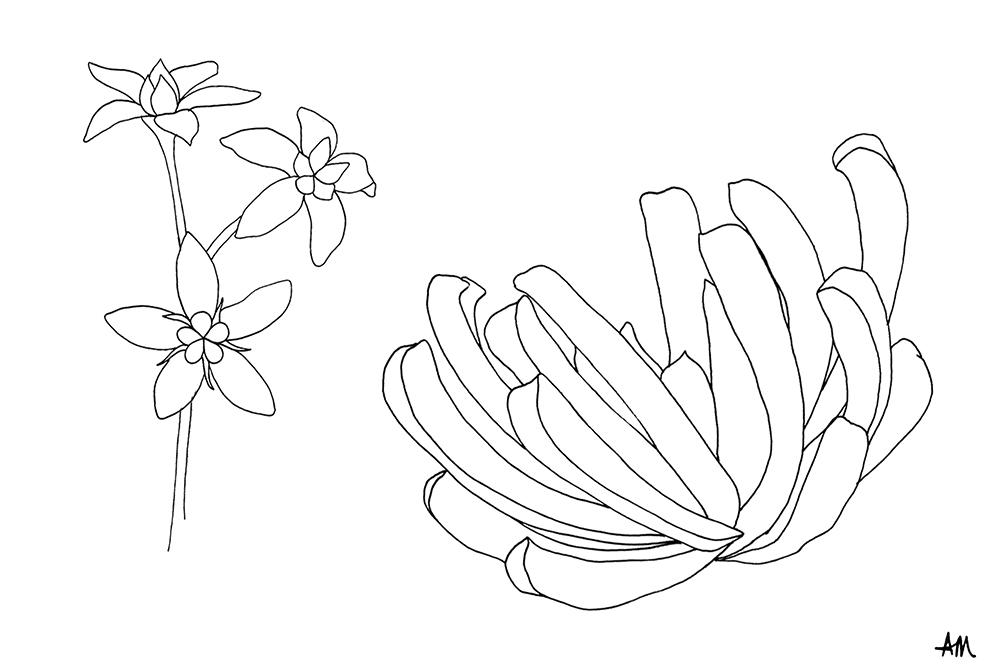 cactus-flower-illustration-02.jpg
