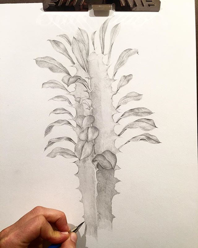Homebound and happy to be working on my drawing skiiilllllzzzz 🏡🙂👩🏻🎨 . . . . . #cactus #cactuslover #succulents #succulentdrawing #botanicaldrawing #botanicalillustration #pencil #plantdrawing