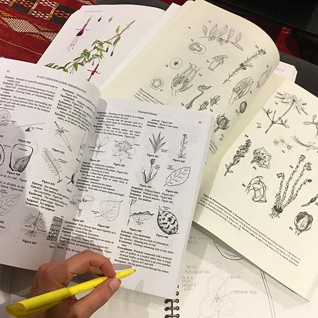 Botanical illustration ain't no joke! #studying #plantmorphology #certificateprogrambronxbotanical