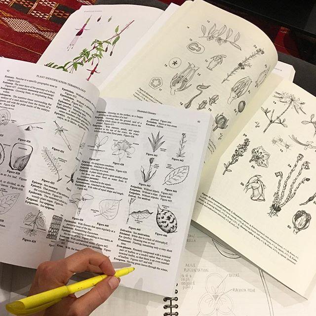 Botanical illustration ain't no joke! #studying #plantmorphology #certificateprogrambronxbotanical
