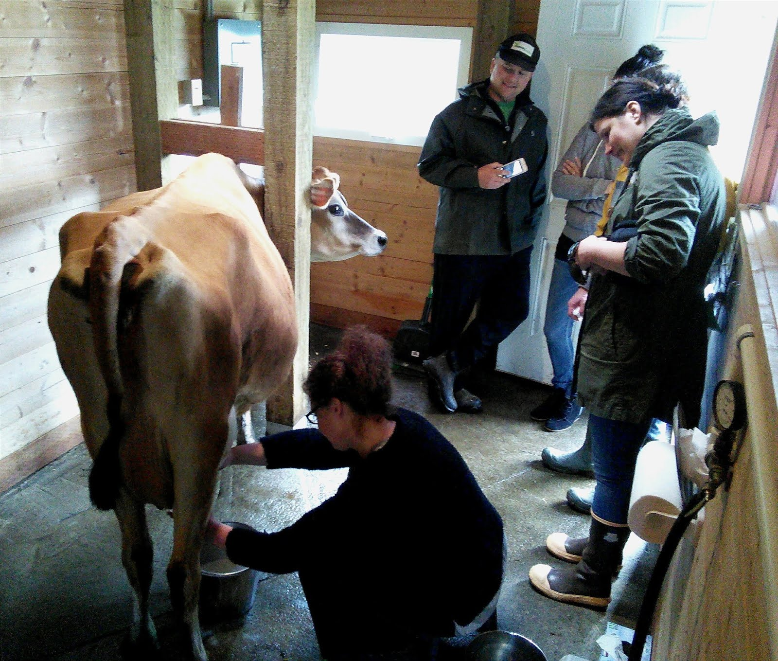Class members learning how to milk Jingle by hand