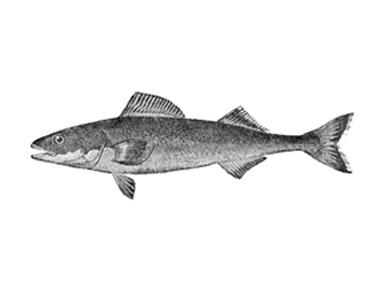 sablefish.jpg