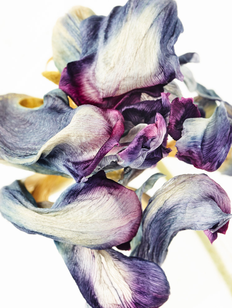 tulipaner_+2_web.jpg