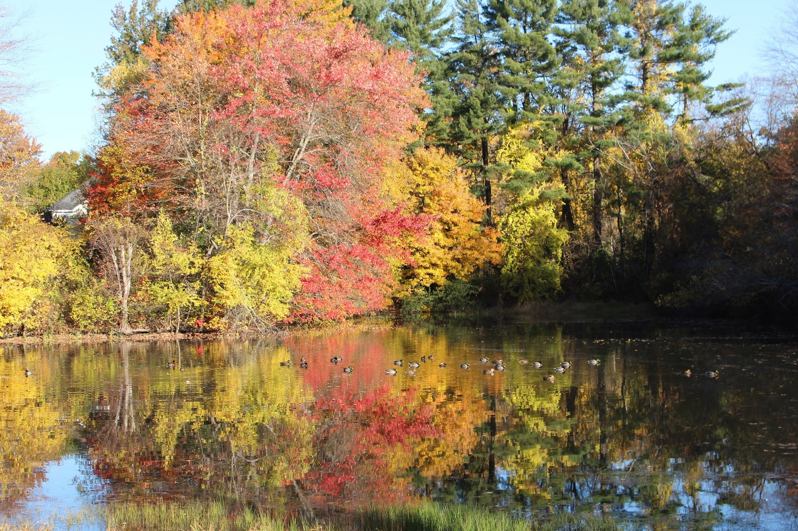 The pond on Meadowbrook's campus -November 1, 2016