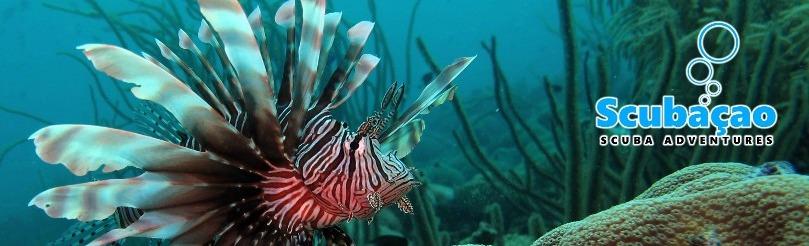 Curacao Scuba Experience