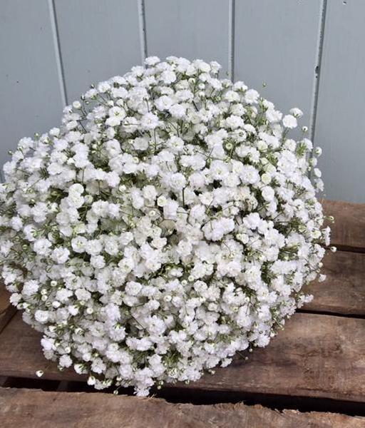 White Gypsophila Bouquet.jpg