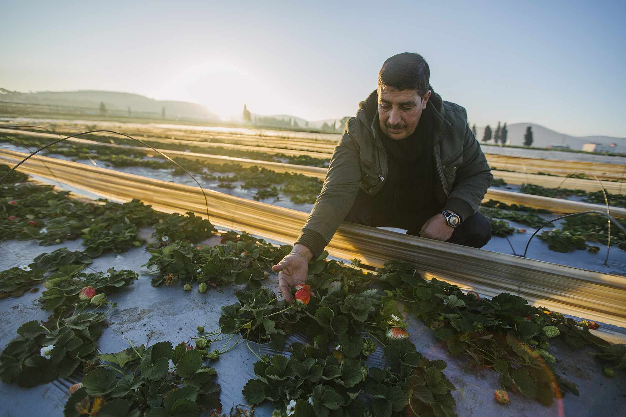 USAID-Israel-Day5-Strawberries-_07A7763.jpg